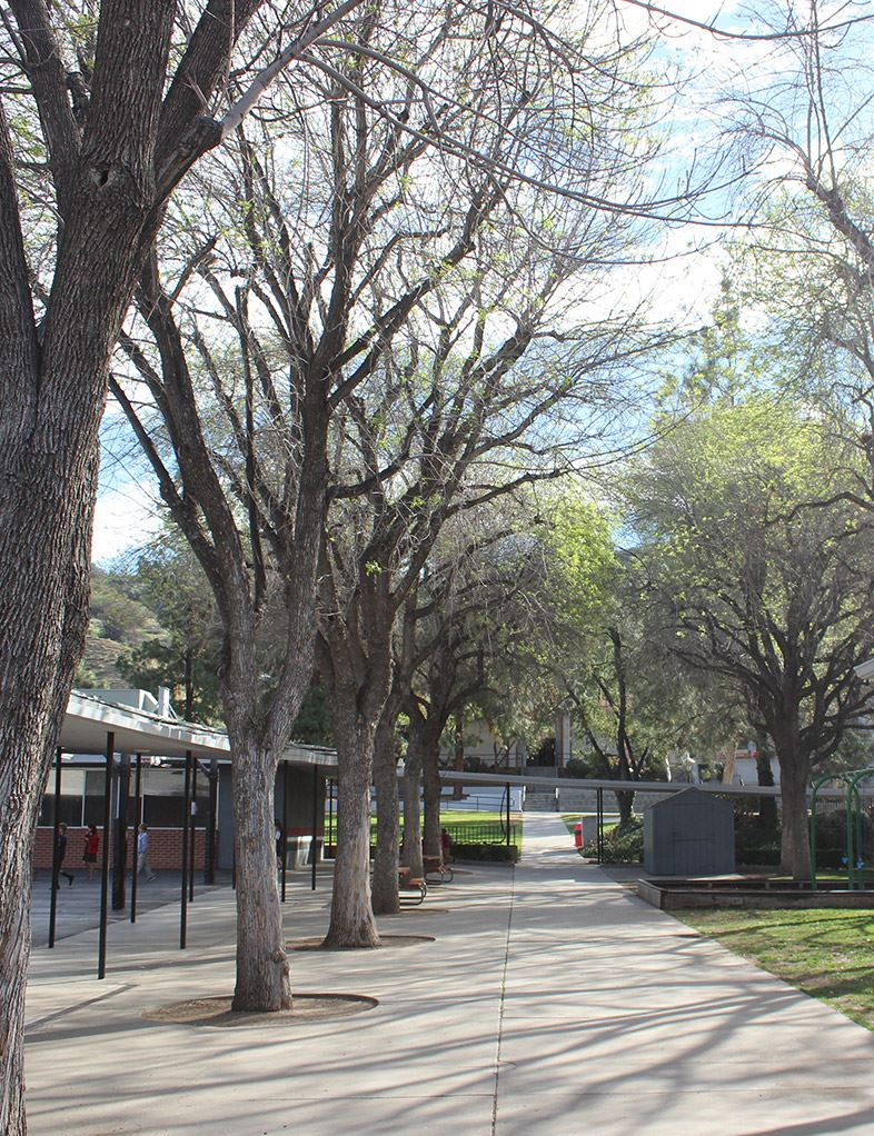 Picture of the Campus